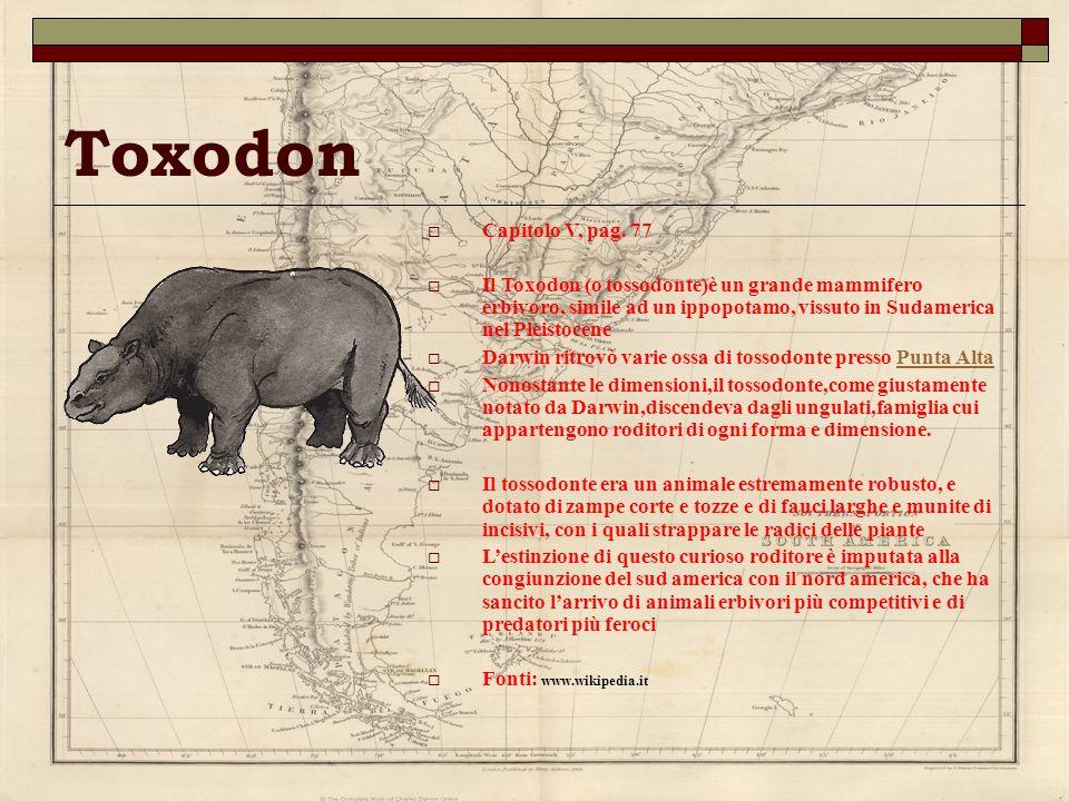 Toxodon Capitolo V, pag. 77. Il Toxodon (o tossodonte)è un grande mammifero erbivoro, simile ad un ippopotamo, vissuto in Sudamerica nel Pleistocene.