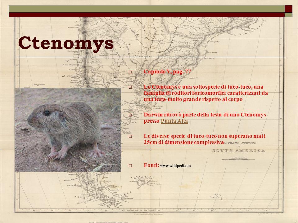 Ctenomys Capitolo V, pag. 77