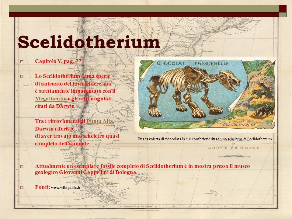 Scelidotherium Capitolo V, pag. 77 Lo Scelidotherium è una specie