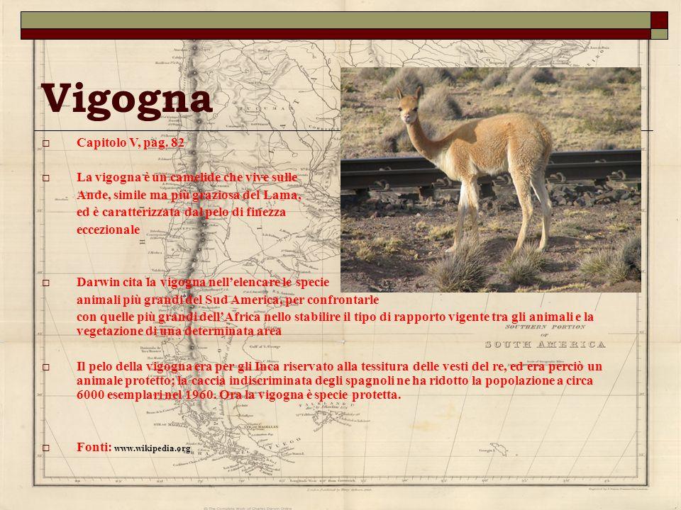 Vigogna Capitolo V, pag. 82 La vigogna è un camelide che vive sulle