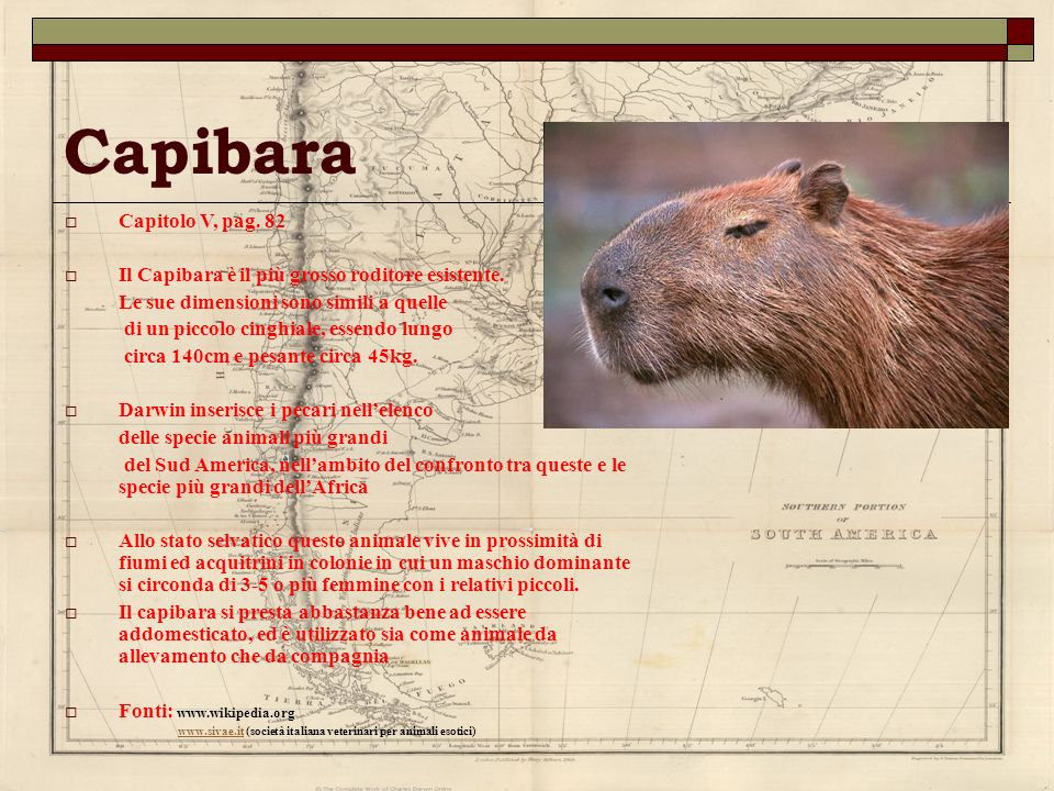 Capibara Capitolo V, pag. 82