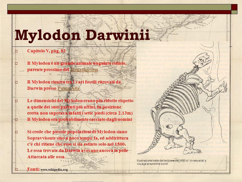 Mylodon Darwinii Capitolo V, pag. 82