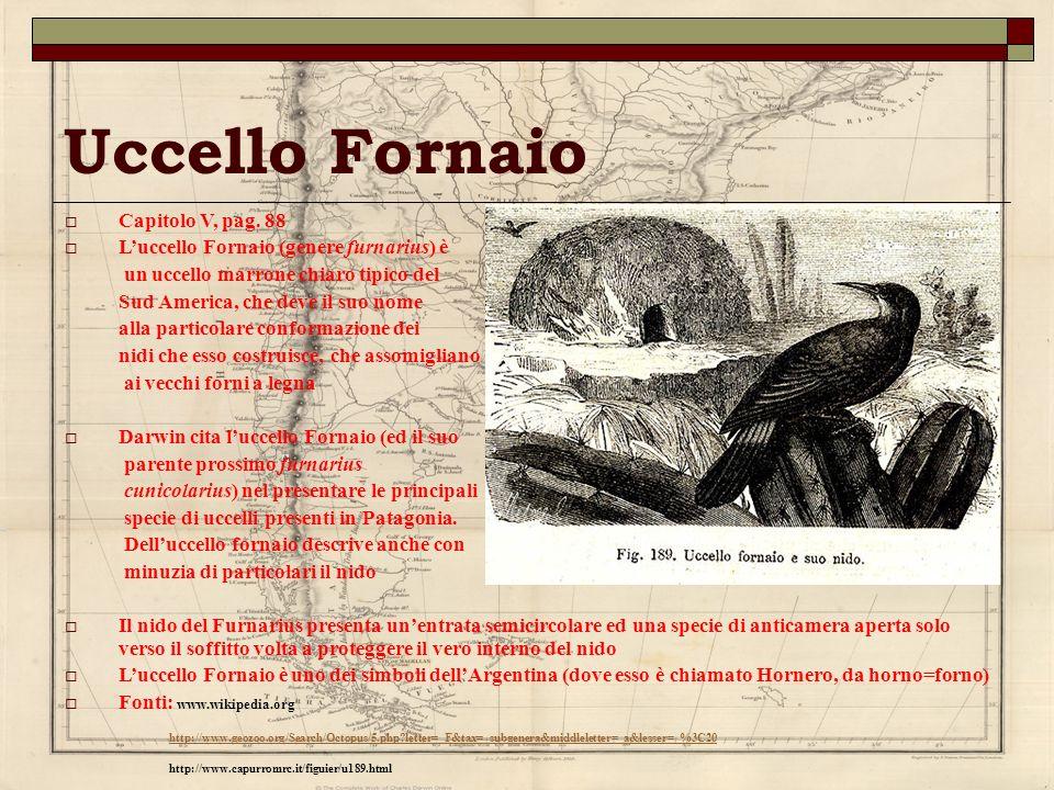 Uccello Fornaio Capitolo V, pag. 88