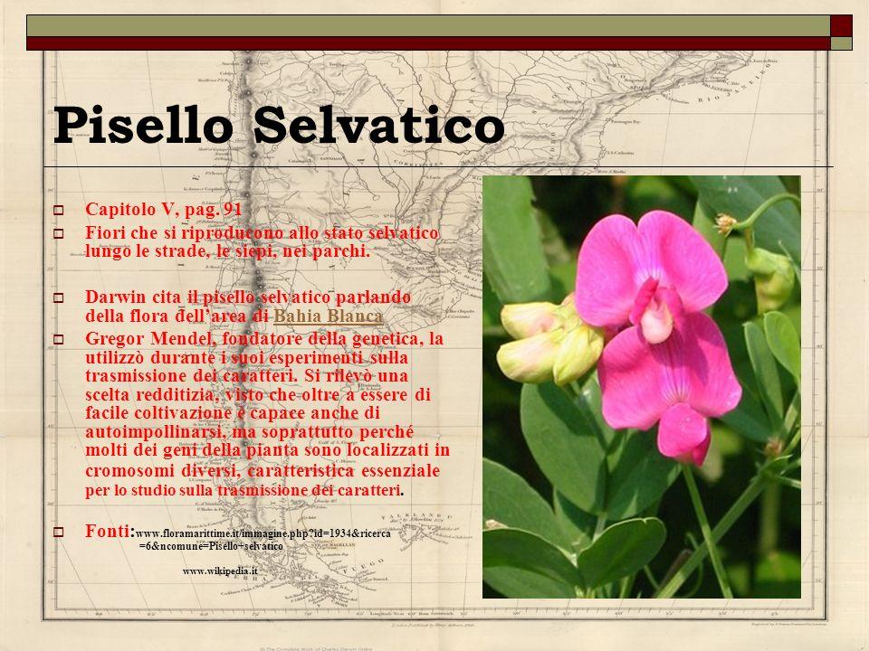 Pisello Selvatico Capitolo V, pag. 91