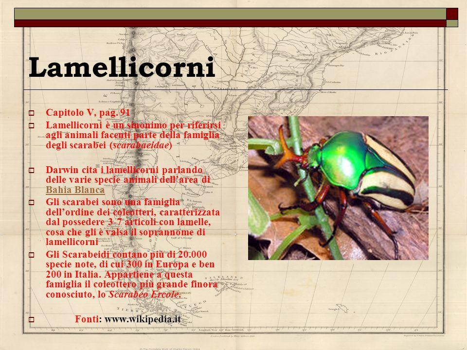 Lamellicorni Capitolo V, pag. 91