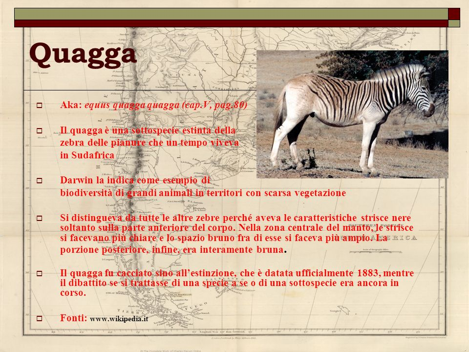 Quagga Aka: equus quagga quagga (cap.V, pag.80)