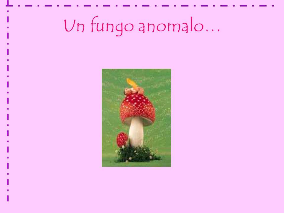 Un fungo anomalo…