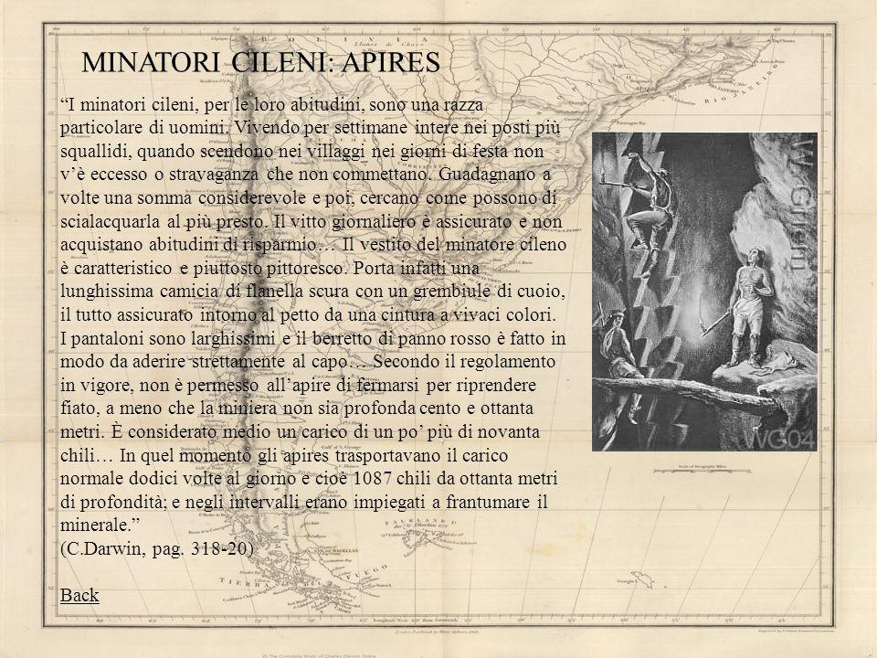 MINATORI CILENI: APIRES