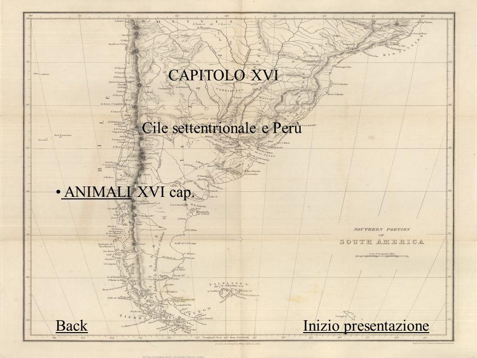CAPITOLO XVI Cile settentrionale e Perù. ANIMALI XVI cap.