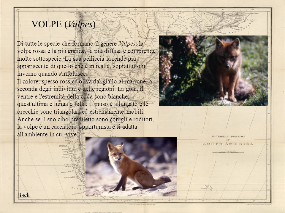 VOLPE (Vulpes)
