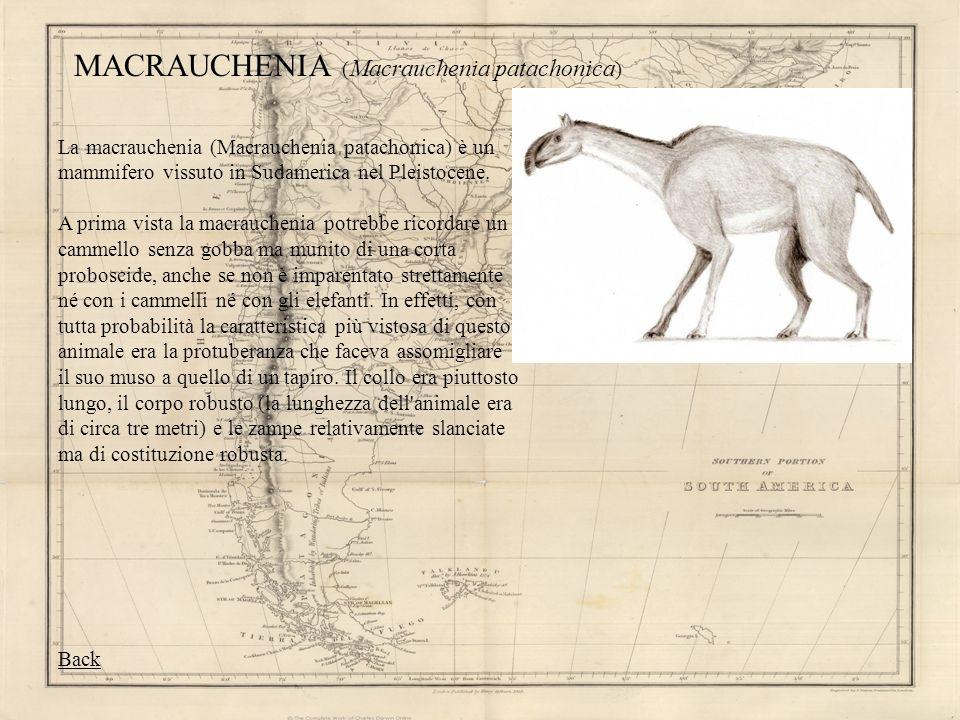 MACRAUCHENIA (Macrauchenia patachonica)