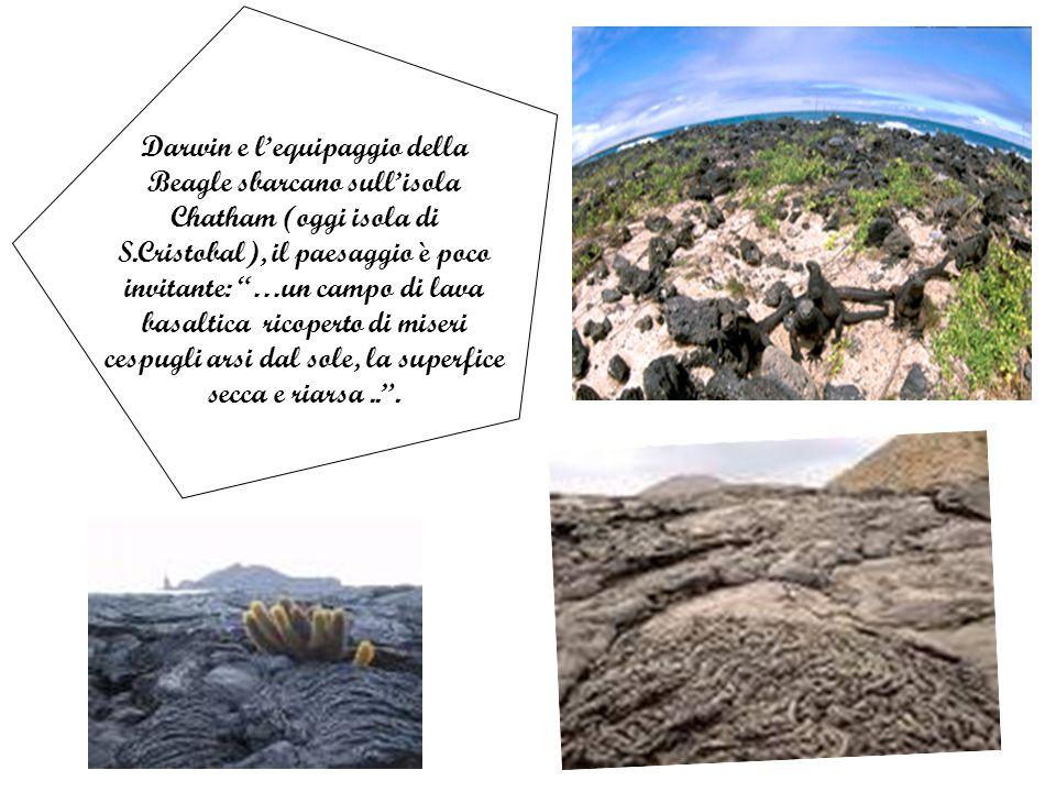 Darwin e l'equipaggio della Beagle sbarcano sull'isola Chatham (oggi isola di S.Cristobal), il paesaggio è poco invitante: …un campo di lava basaltica ricoperto di miseri cespugli arsi dal sole, la superfice secca e riarsa .. .