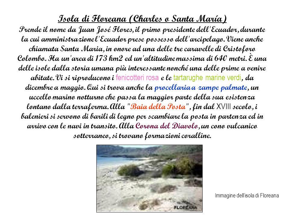 Isola di Floreana (Charles o Santa María)