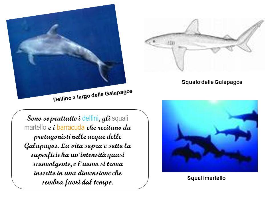 Squalo delle Galapagos