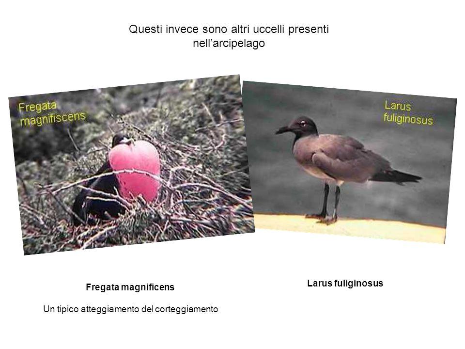 Questi invece sono altri uccelli presenti nell'arcipelago