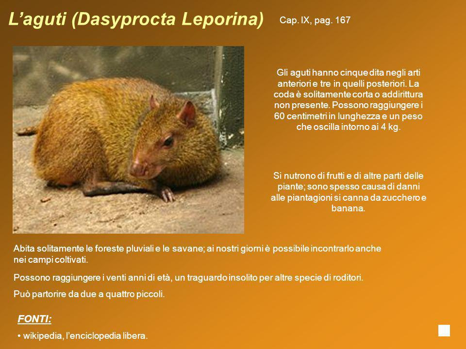 L'aguti (Dasyprocta Leporina)