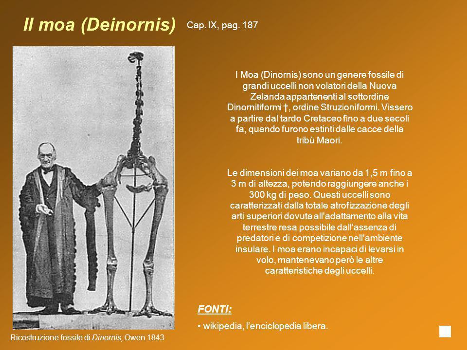 Il moa (Deinornis) FONTI: Cap. IX, pag. 187