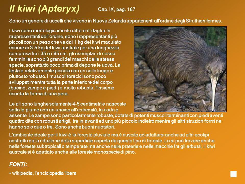Il kiwi (Apteryx) FONTI: Cap. IX, pag. 187