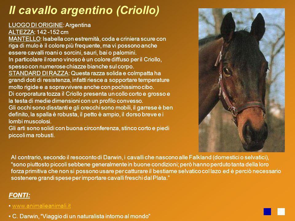 Il cavallo argentino (Criollo)