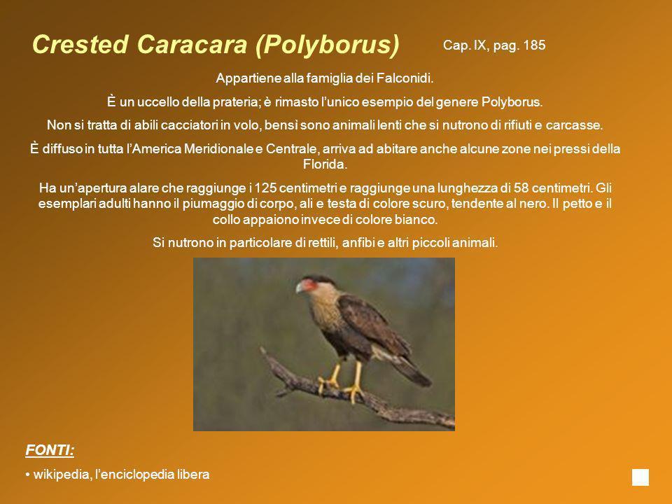 Crested Caracara (Polyborus)