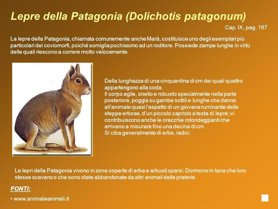 Lepre della Patagonia (Dolichotis patagonum)