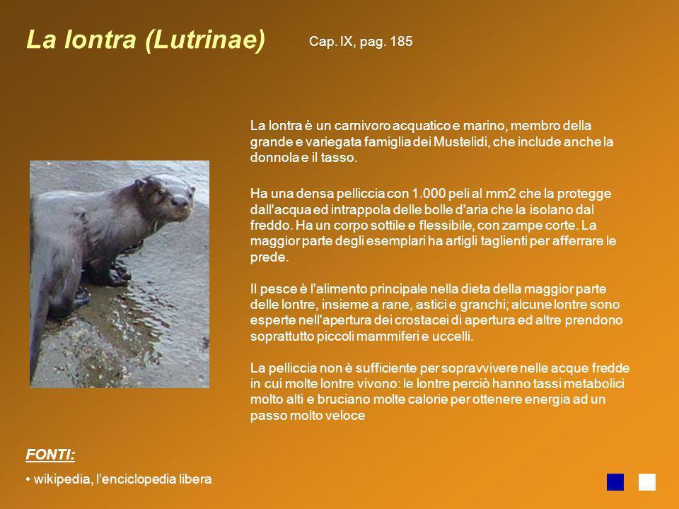 La lontra (Lutrinae) FONTI: Cap. IX, pag. 185
