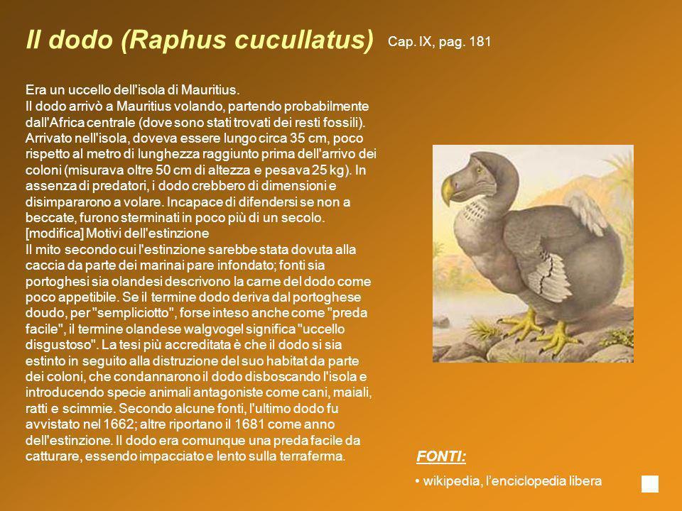 Il dodo (Raphus cucullatus)