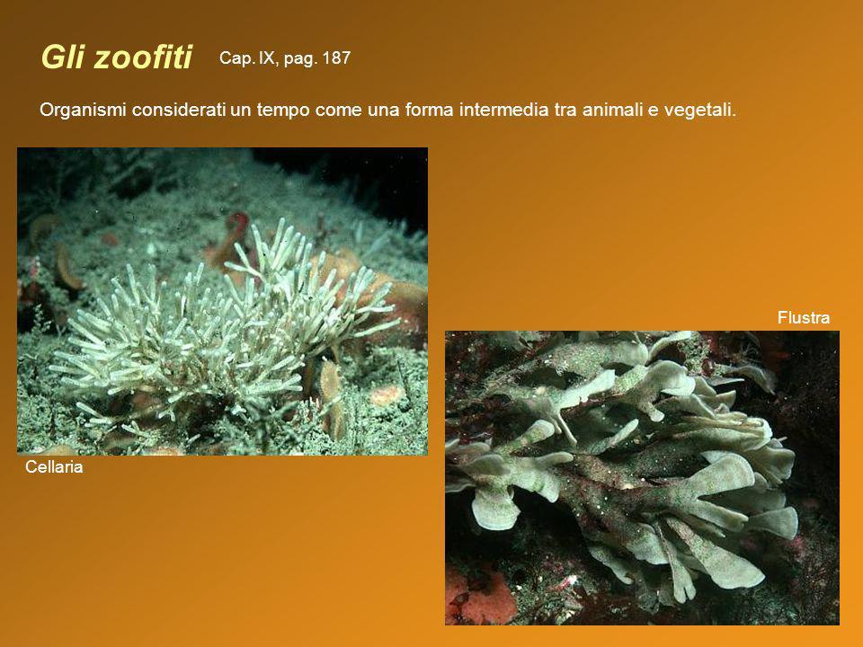 Gli zoofiti Cap. IX, pag. 187. Organismi considerati un tempo come una forma intermedia tra animali e vegetali.