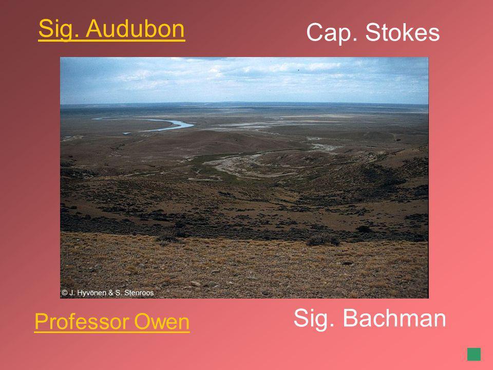 Sig. Audubon Cap. Stokes Sig. Bachman Professor Owen