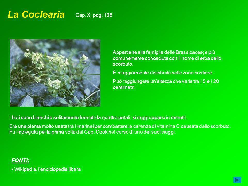 La Coclearia FONTI: Cap. X, pag. 198
