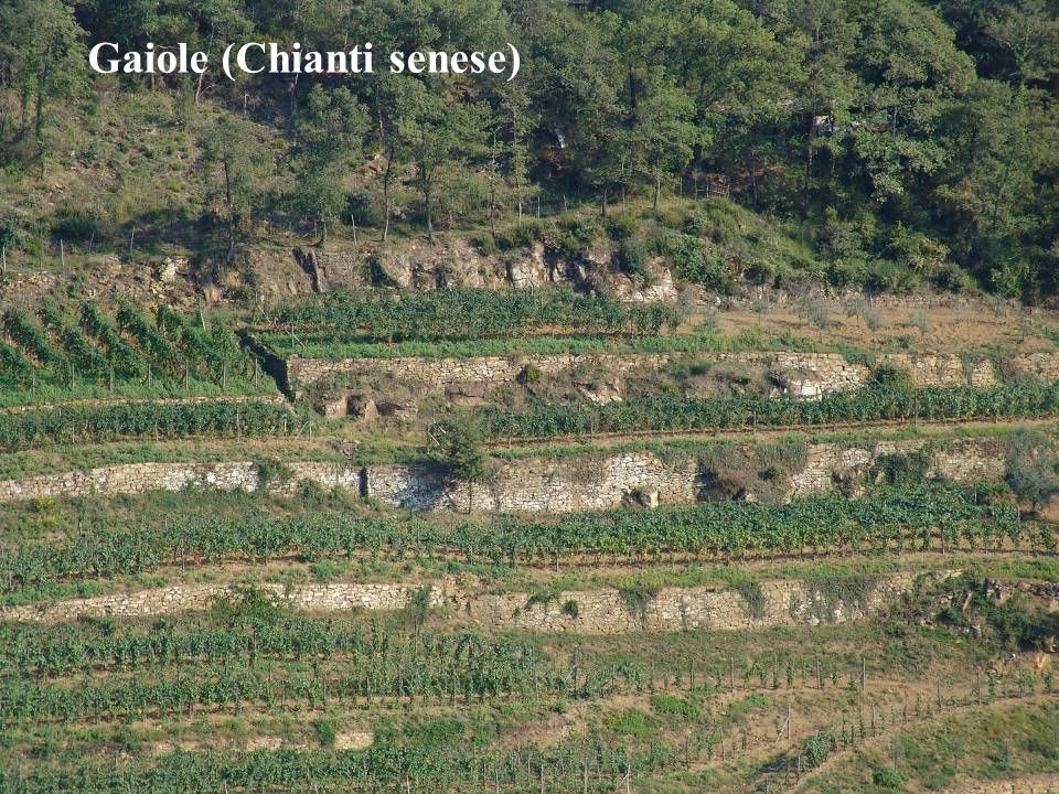Gaiole (Chianti senese)