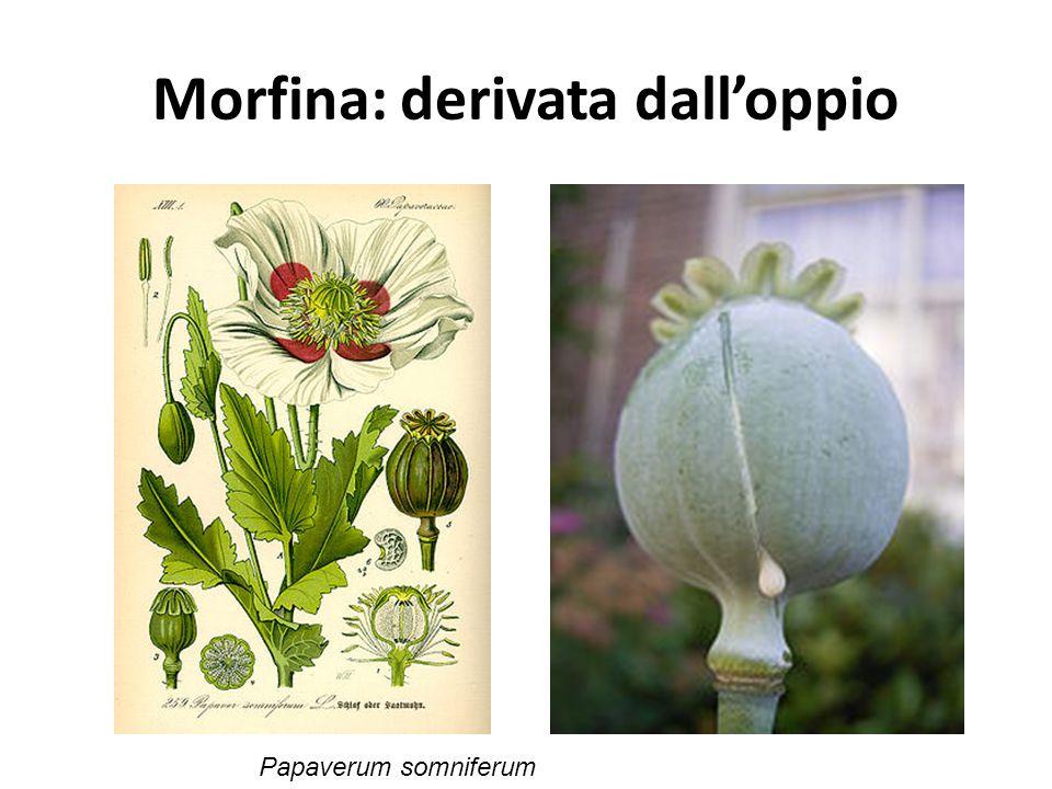 Morfina: derivata dall'oppio