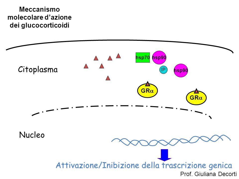 Meccanismo molecolare d'azione dei glucocorticoidi