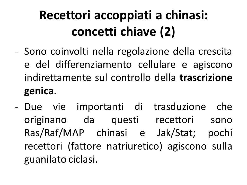 Recettori accoppiati a chinasi: concetti chiave (2)