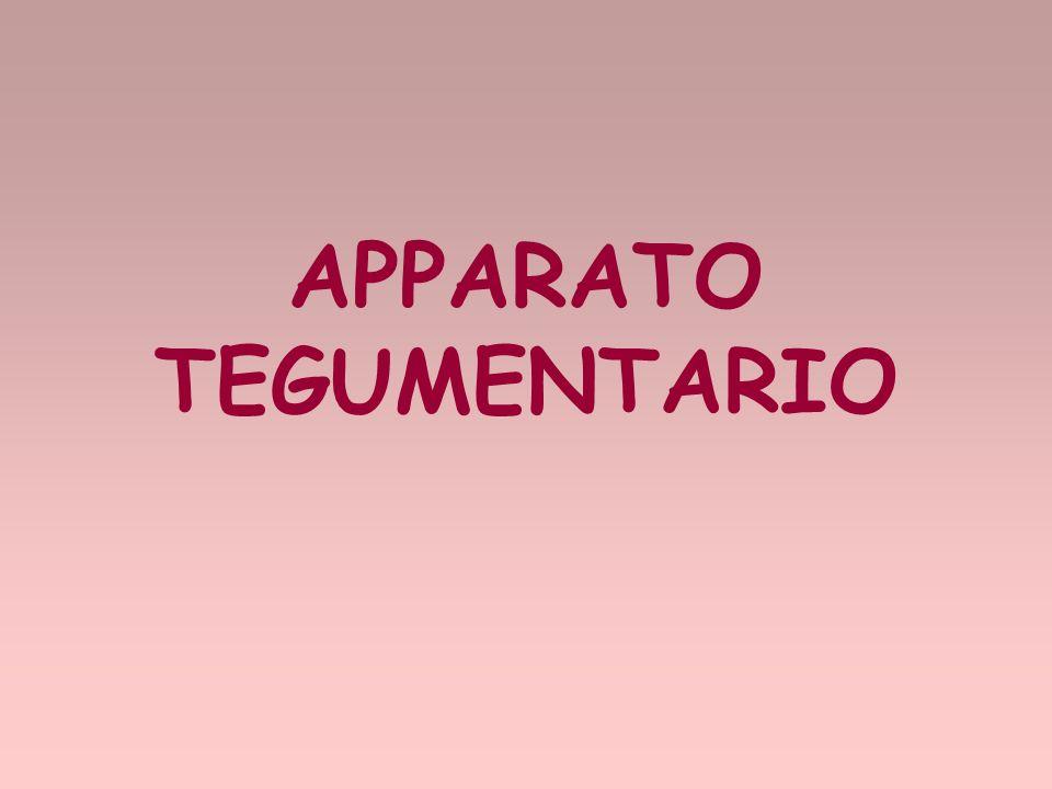 APPARATO TEGUMENTARIO