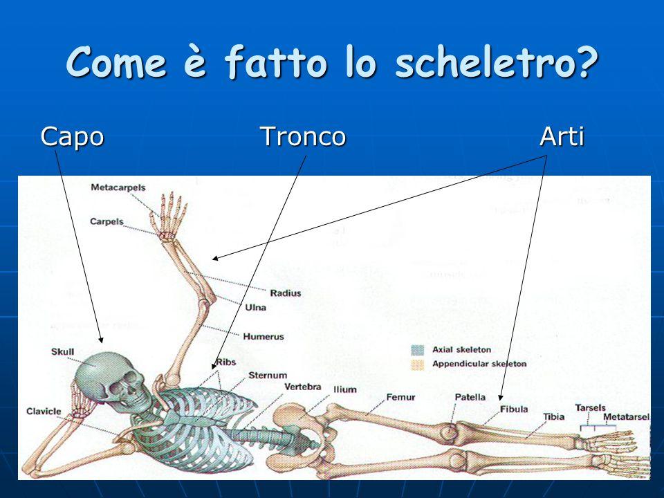 Come è fatto lo scheletro