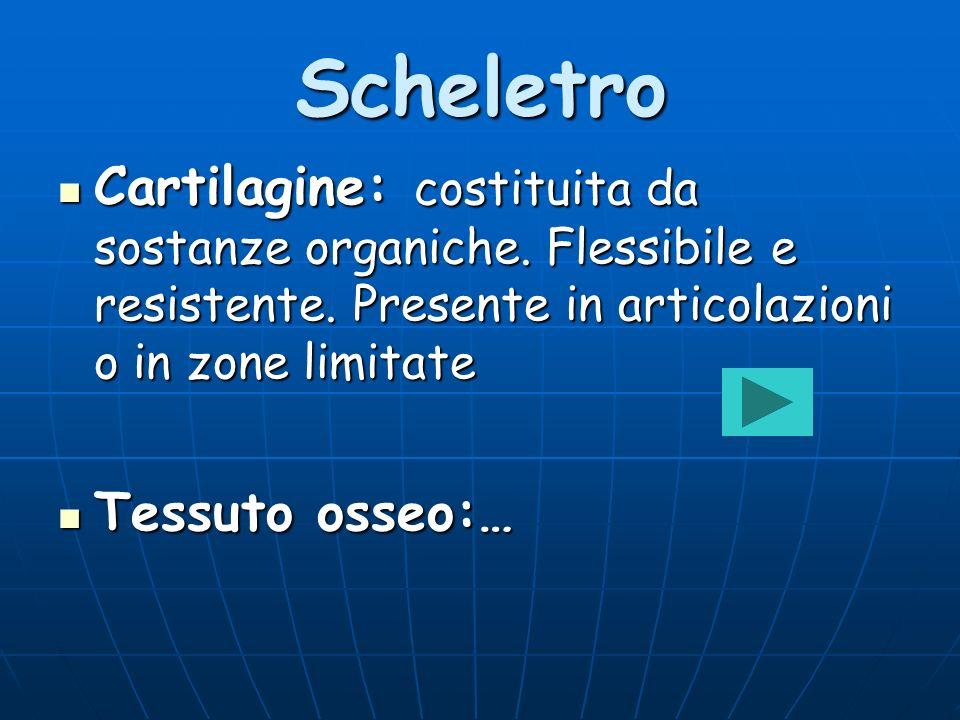 Scheletro Cartilagine: costituita da sostanze organiche. Flessibile e resistente. Presente in articolazioni o in zone limitate.