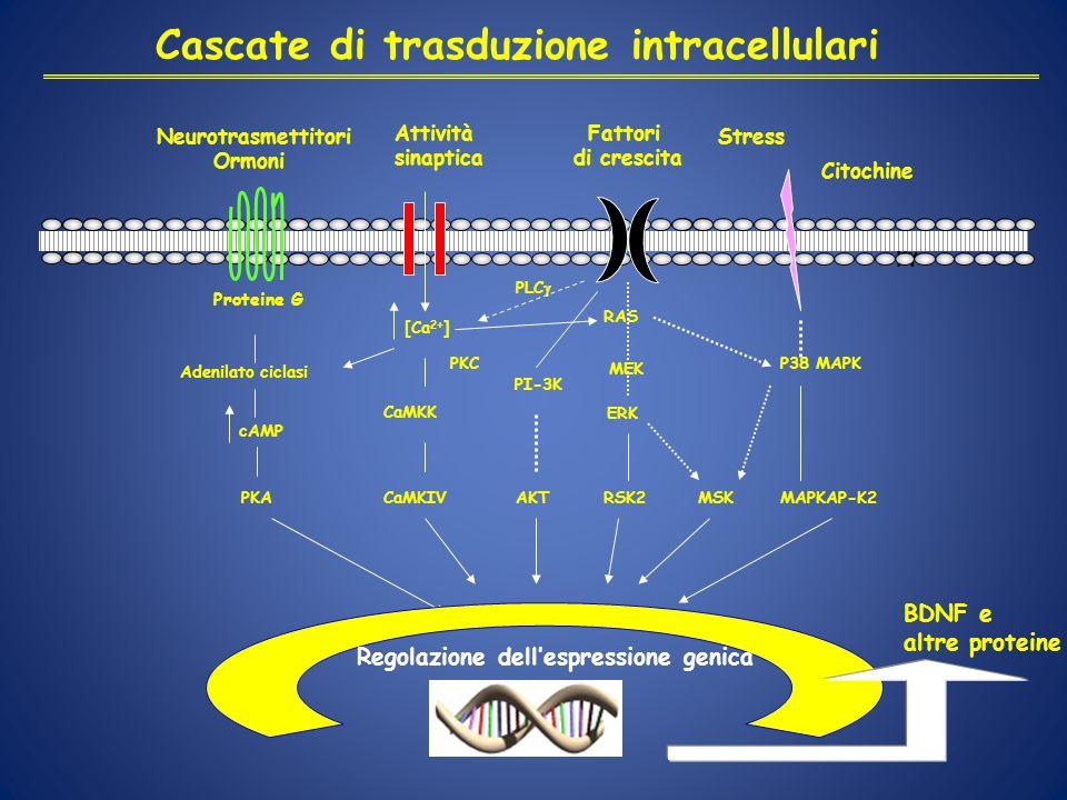 Cascate di trasduzione intracellulari