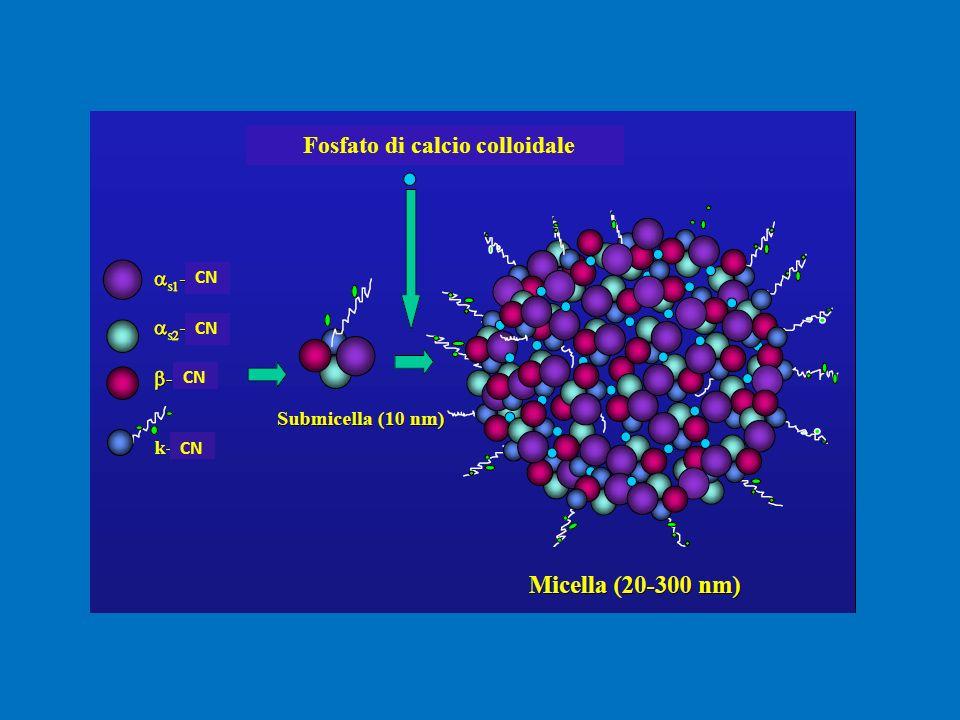 Fosfato di calcio colloidale