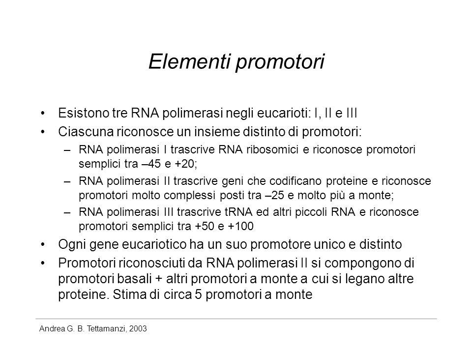 Elementi promotori Esistono tre RNA polimerasi negli eucarioti: I, II e III. Ciascuna riconosce un insieme distinto di promotori: