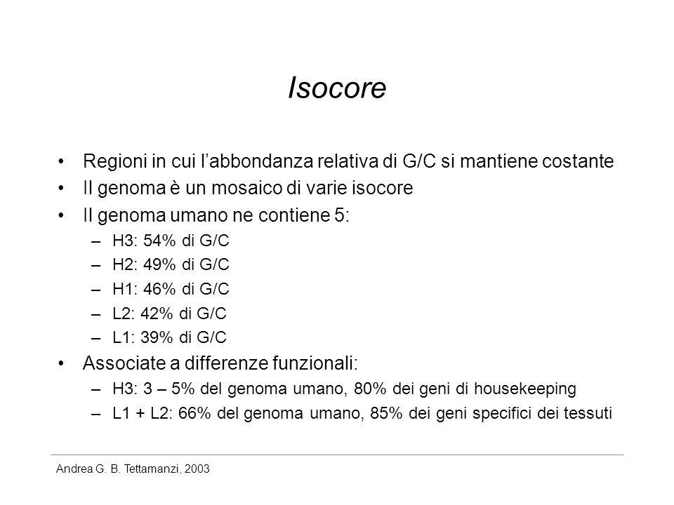 Isocore Regioni in cui l'abbondanza relativa di G/C si mantiene costante. Il genoma è un mosaico di varie isocore.