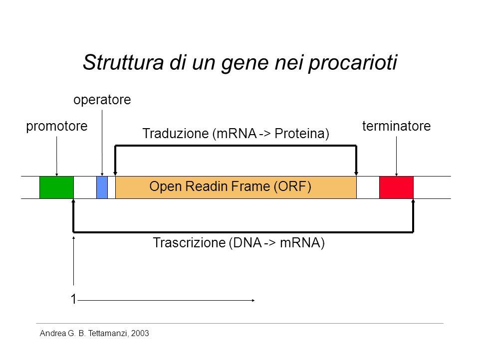 Struttura di un gene nei procarioti