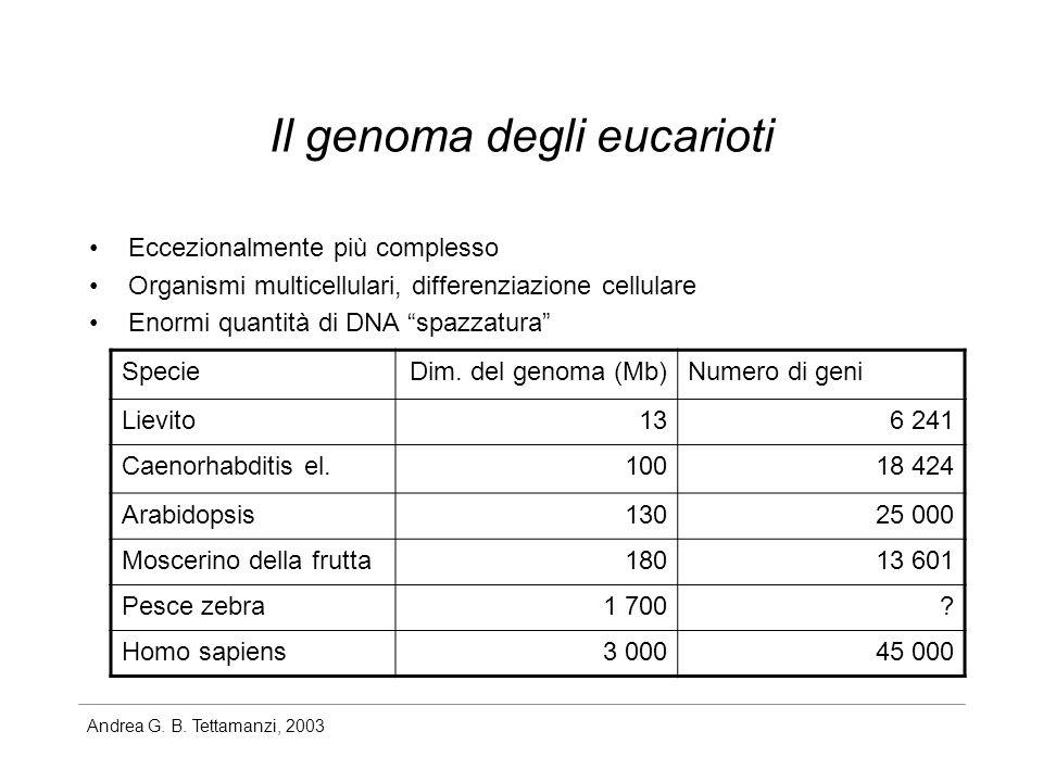 Il genoma degli eucarioti