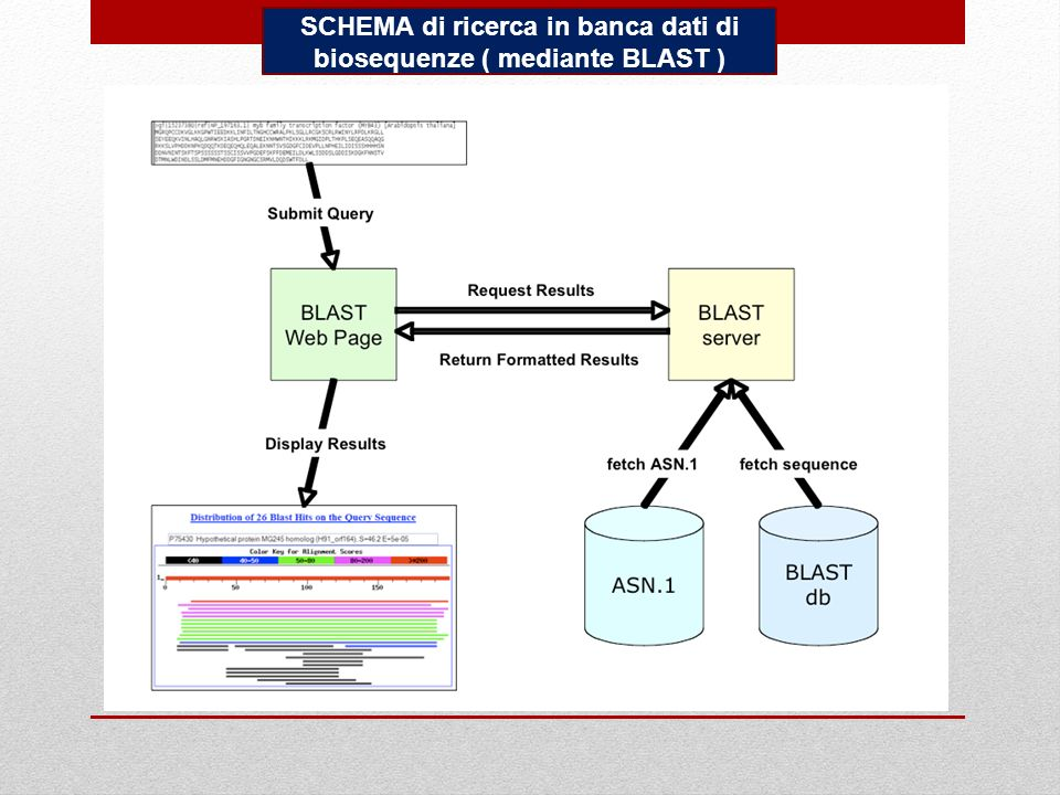 SCHEMA di ricerca in banca dati di biosequenze ( mediante BLAST )