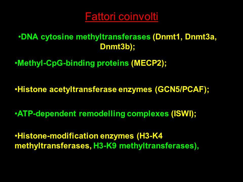 DNA cytosine methyltransferases (Dnmt1, Dnmt3a, Dnmt3b);