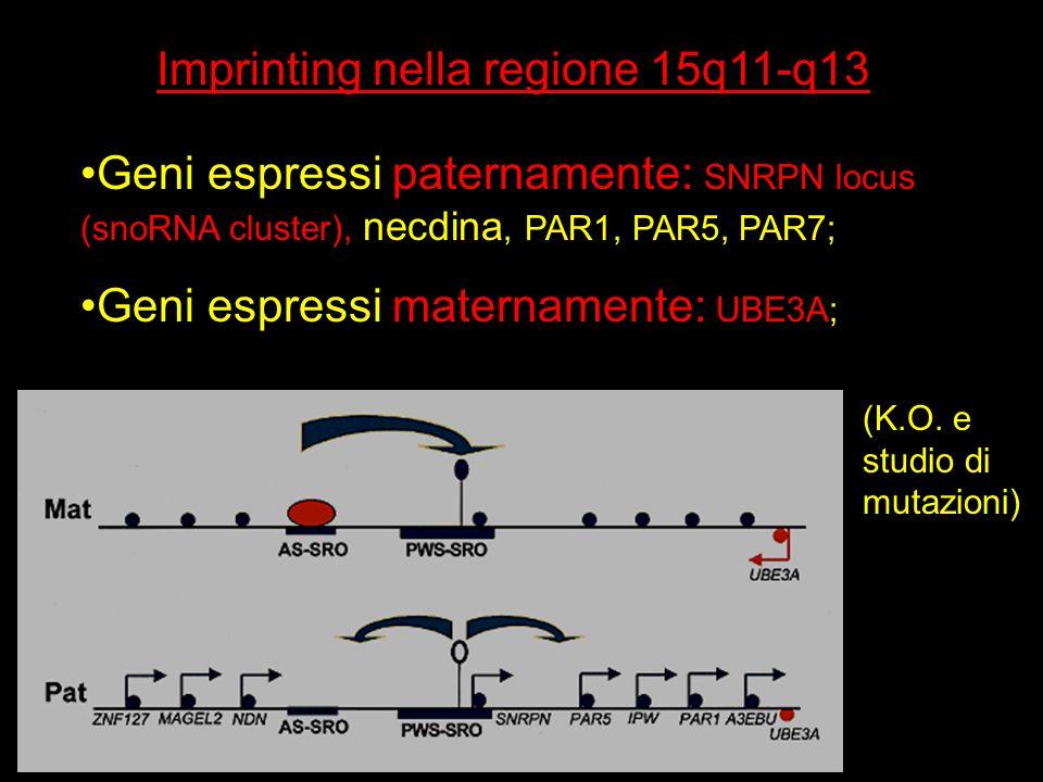 Imprinting nella regione 15q11-q13