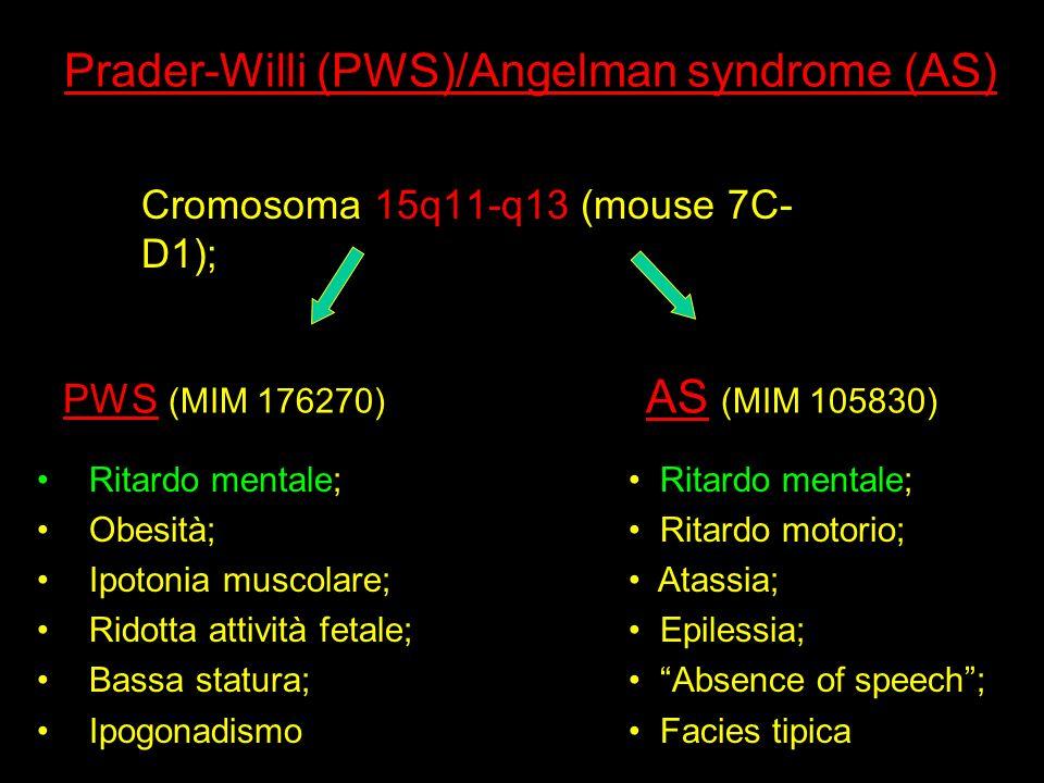 Prader-Willi (PWS)/Angelman syndrome (AS)