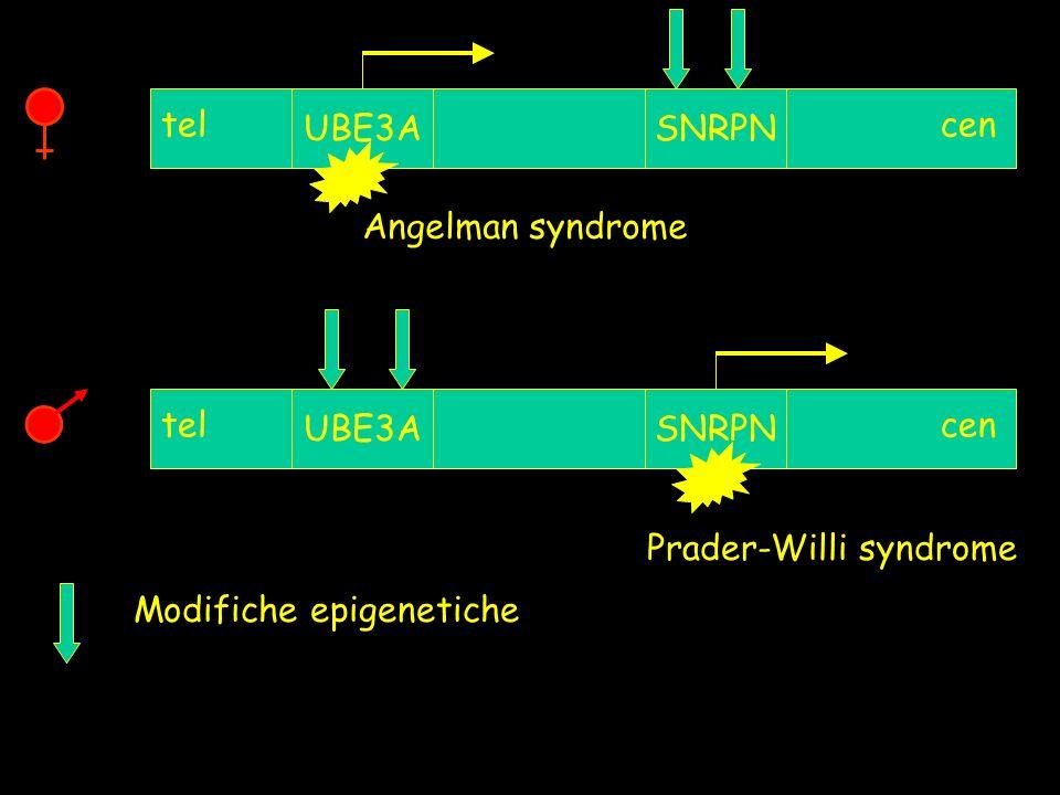 Modifiche epigenetiche