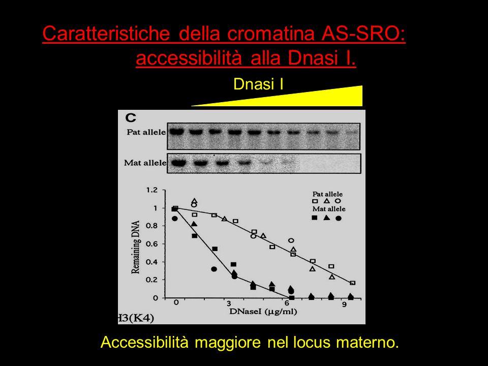 Caratteristiche della cromatina AS-SRO: accessibilità alla Dnasi I.
