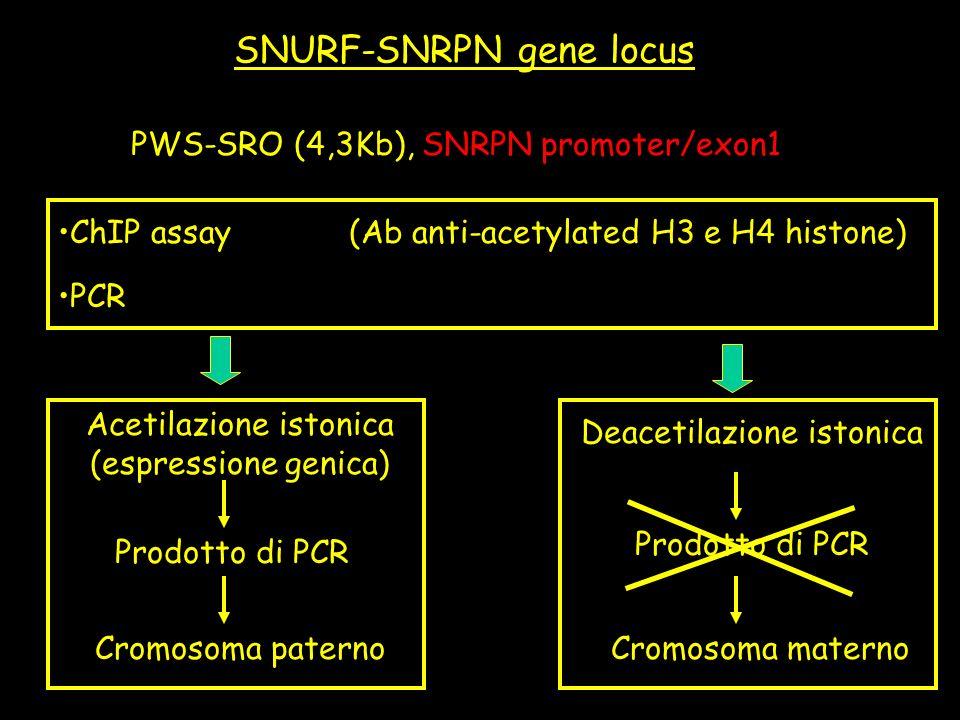 SNURF-SNRPN gene locus